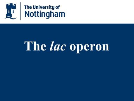 The lac operon.