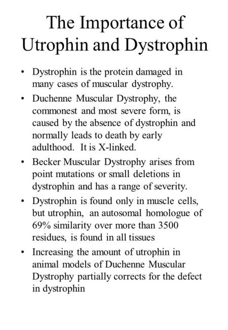 The Importance of Utrophin and Dystrophin Dystrophin is the protein damaged in many cases of muscular dystrophy. Duchenne Muscular Dystrophy, the commonest.