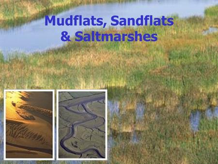 Mudflats, Sandflats & Saltmarshes. Mudflats/Sandflats In estuarine environments sediment that becomes too heavy to be transported will settle and be deposited.