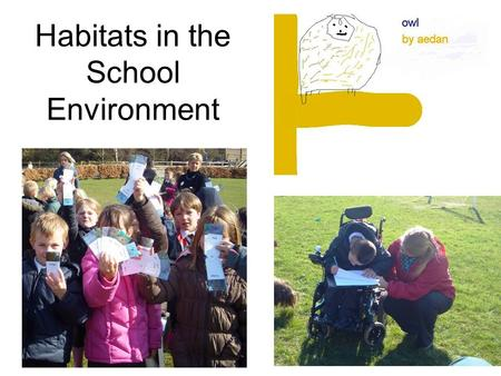 Habitats in the School Environment. Starting with ideas At the outset of the project, the children collected their ideas on large sheets of paper. They.
