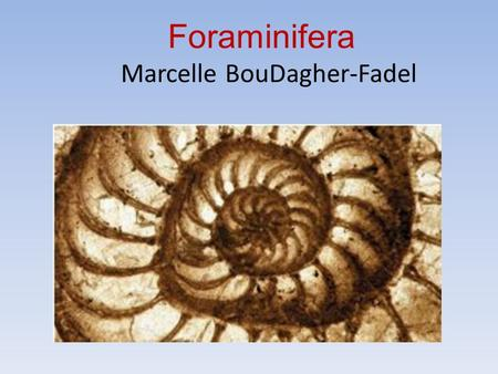 Foraminifera Marcelle BouDagher-Fadel. What are Foraminifera: with characteristic net-like pseudopodia called reticulopodia organic or shell-like, agglutinated.