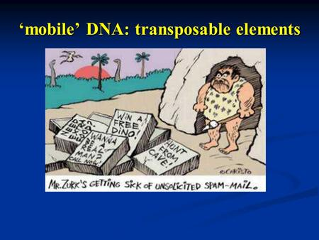 Mobile DNA: transposable elements. Transposable elements Discrete sequences in the genome that have the ability to translocate or copy itself across to.