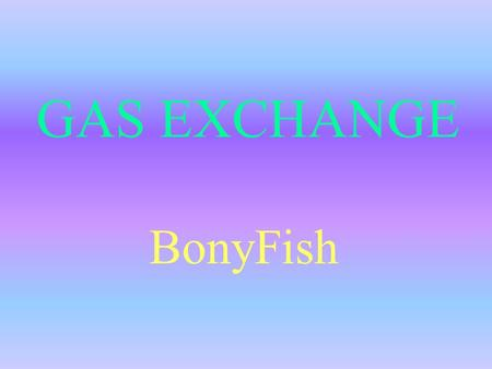 GAS EXCHANGE BonyFish. Specialised Exchange Surface Bony fish have a small surface area to volume ratio for gas exchange. They have an impermeable membrane.