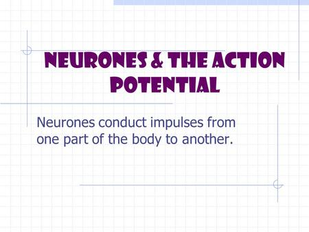 Neurones & the Action Potential Neurones conduct impulses from one part of the body to another.