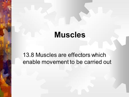 Muscles 13.8 Muscles are effectors which enable movement to be carried out.