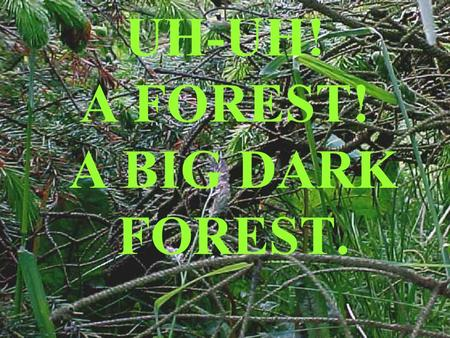 UH-UH! A FOREST! A BIG DARK FOREST.. We took digital video and stills cameras to film the forest in the school plantation. We saw…