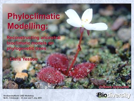 BiodiversityWorld GRID Workshop NeSC, Edinburgh – 30 June and 1 July 2005 Phyloclimatic Modelling: Reconstructing ancestral bioclimatic models on phylogenetic.