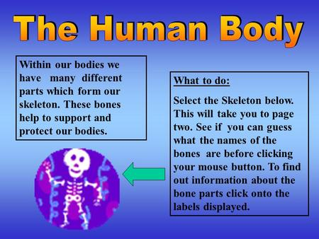 Within our bodies we have many different parts which form our skeleton. These bones help to support and protect our bodies. What to do: Select the Skeleton.