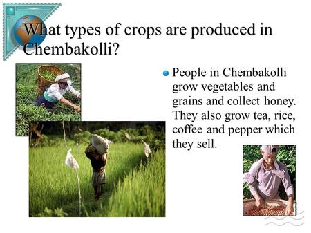 What types of crops are produced in Chembakolli? People in Chembakolli grow vegetables and grains and collect honey. They also grow tea, rice, coffee and.