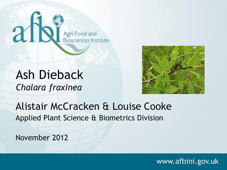 Ash Dieback Chalara fraxinea Alistair McCracken & Louise Cooke Applied Plant Science & Biometrics Division November 2012.