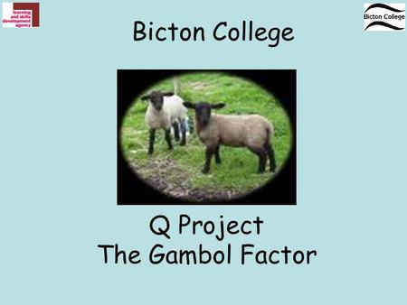Q Project The Gambol Factor Bicton College. Question Why would the shepherd suspect this sheep will lamb soon? Answer The sheep is isolating herself Answer.
