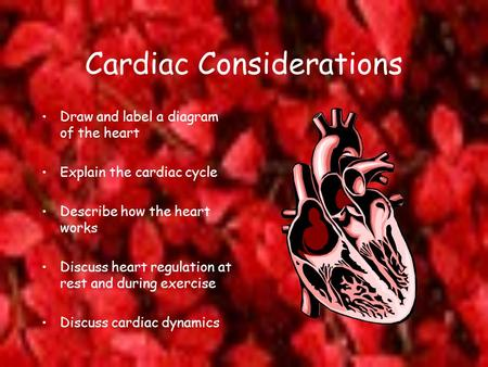 Cardiac Considerations Draw and label a diagram of the heart Explain the cardiac cycle Describe how the heart works Discuss heart regulation at rest and.