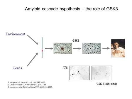 Genes Environment Amyloid cascade hypothesis – the role of GSK3 AT8 GSK-3 inhibitor GSK3 1. Hanger et al. Neurosci.Lett. 1992;147:58-62. 2. Lovestone et.
