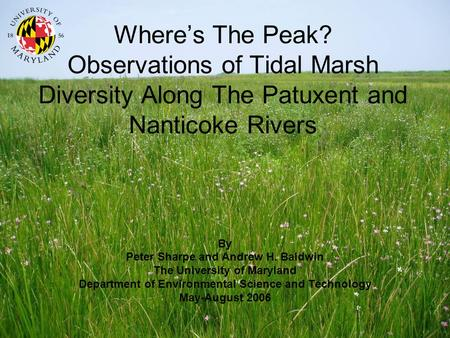 Wheres The Peak? Observations of Tidal Marsh Diversity Along The Patuxent and Nanticoke Rivers By Peter Sharpe and Andrew H. Baldwin The University of.