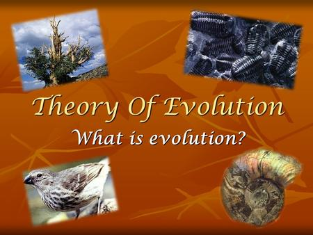 Theory Of Evolution What is evolution?. The Origin Of Species The tumult in the middle of the 19° century was accompanied by the publication of Darwins.