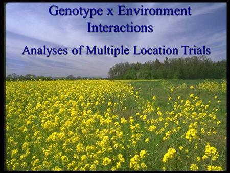 Genotype x Environment Interactions Analyses of Multiple Location Trials.