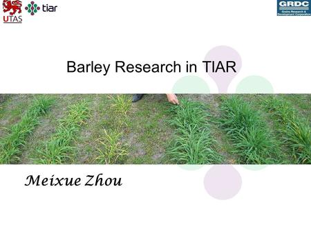 Barley Research in TIAR Meixue Zhou. Barley Research in TIAR s Breeding –Long season and high rainfall areas - Franklin –Spring sown barley – Vertess.