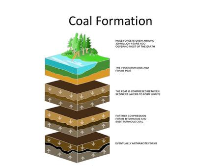 Coal Formation.
