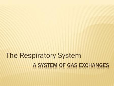 The Respiratory System. KEY CONCEPT The respiratory system exchanges oxygen and carbon dioxide.
