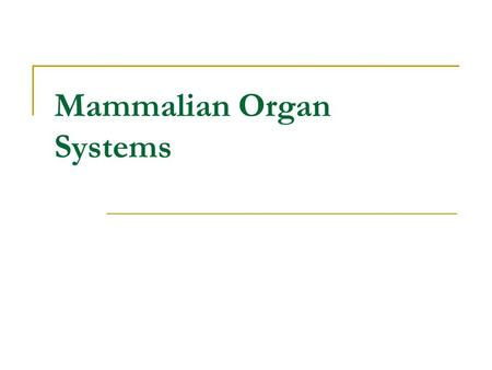digestive system chapter 14. e/health-and-human-body/human- body, Muscles