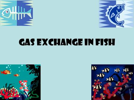 Gas Exchange in fish. Gas exchange in fish - gills The gas exchange organs in fish are the gills. Like other animals, fish require a gas exchange surface.