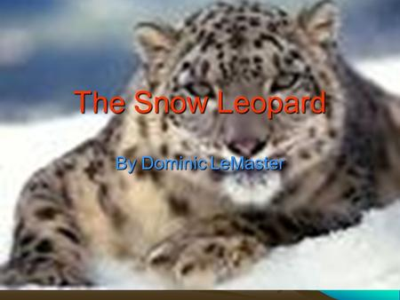 The Snow Leopard By Dominic LeMaster. Let me tell you about my awesome animal it eats mammals and it lives in the mountains can you guess what my animal.