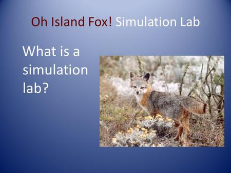 Oh Island Fox! Simulation Lab What is a simulation lab?
