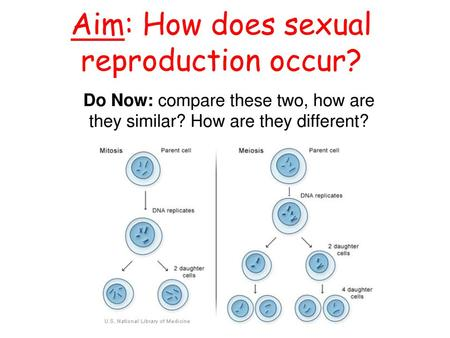Aim: How does sexual reproduction occur?. Look at the end result and what's inside!!
