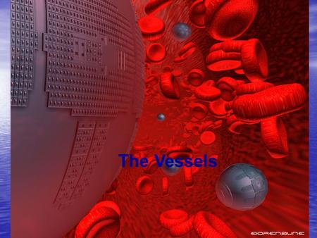 The Vessels. Vessel Anatomy Vessel Layers/Tunics Vessel Layers/Tunics –Tunica Intima: Inner most layer in direct contact with the blood –Tunica Media: