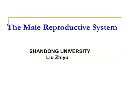 The Male Reproductive System SHANDONG UNIVERSITY Liu Zhiyu.