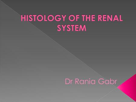 HISTOLOGY OF THE RENAL SYSTEM