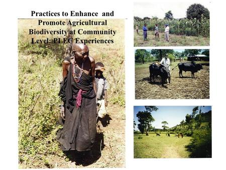 Practices to Enhance and Promote Agricultural Biodiversity at Community Level: PLEC Experiences.