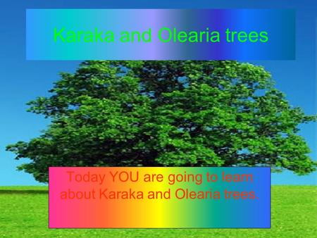 Karaka and Olearia trees Today YOU are going to learn about Karaka and Olearia trees.