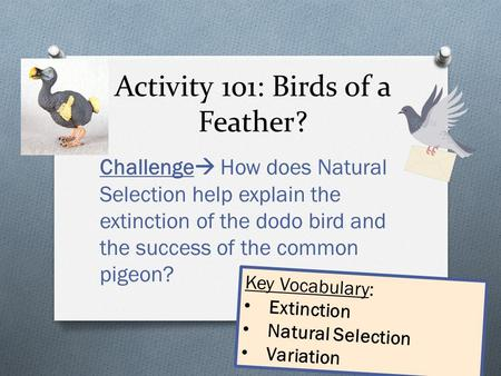 Activity 101: Birds of a Feather? Challenge  How does Natural Selection help explain the extinction of the dodo bird and the success of the common pigeon?