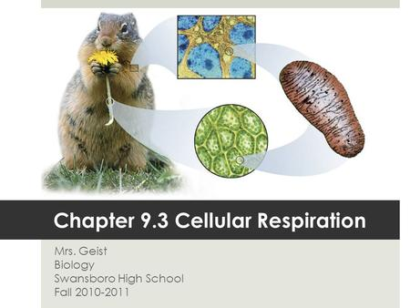 Chapter 9.3 Cellular Respiration Mrs. Geist Biology Swansboro High School Fall 2010-2011.