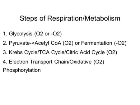 Steps of Respiration/Metabolism 1. Glycolysis (O2 or -O2) 2. Pyruvate->Acetyl CoA (O2) or Fermentation (-O2) 3. Krebs Cycle/TCA Cycle/Citric Acid Cycle.