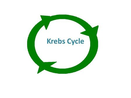 Krebs Cycle. Cellular Respiration Process by which our cells produce energy from the foods we eat 3 parts: – Glycolysis – Krebs cycle – Electron transport.