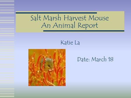 Salt Marsh Harvest Mouse An Animal Report Katie La Date: March 18.