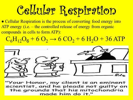 Cellular Respiration ● Cellular Respiration is the process of converting food energy into ATP energy (i.e. – the controlled release of energy from organic.