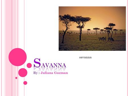 By : Juliana Guzman savanna D ESCRIPTION A Savanna is a rolling grassland scattered with shrubs and insolated trees, which can be found between a tropical.