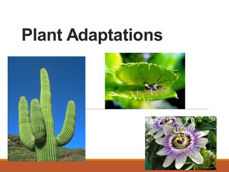 Plant Adaptations. Types of Adaptations Structural Adaptations ◦The way something is built or made. Behavioral Adaptations ◦The way something acts naturally.