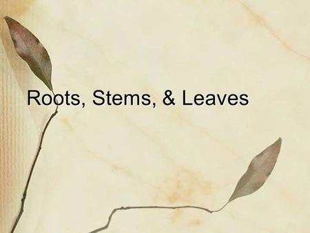 Roots, Stems, & Leaves.