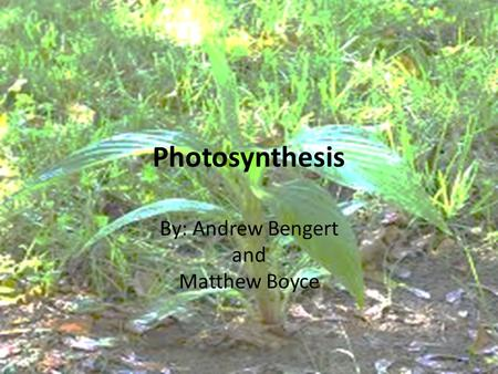 <strong>Photosynthesis</strong> By: Andrew Bengert and Matthew Boyce.
