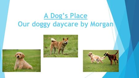 A Dog's Place Our doggy daycare by Morgan. What we provide for your animals ➢ We provide food for your dogs. ➢ We train your dogs for no extra cost. ➢
