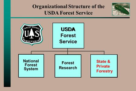 Organizational Structure of the USDA Forest Service USDA Forest Research National Forest System State & Private Forestry.