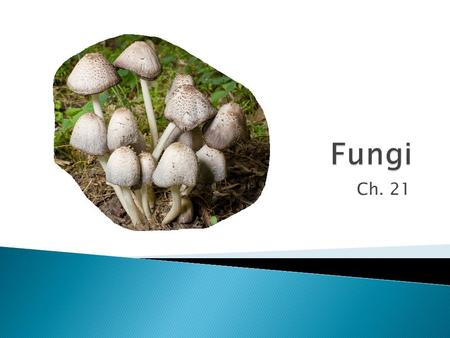 Ch. 21.  What are fungi? ◦ Eukaryotic heterotrophs that have cell walls made of chitin.  Yeasts, molds and mushrooms.