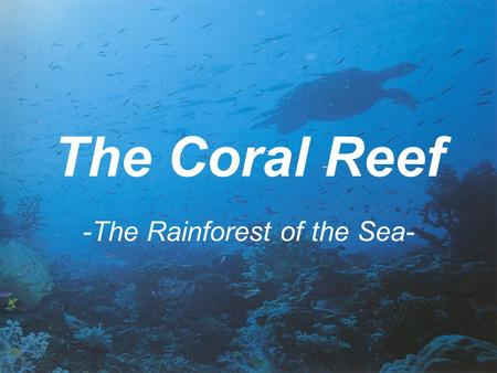 The Coral Reef -The Rainforest of the Sea-. Location Found in shallow seas between the latitudes 30° N and 30° S—the Tropics of Cancer and Capricorn.
