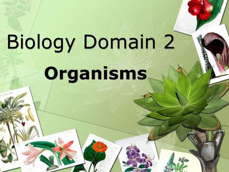 Biology Domain 2 Organisms. Biology Standard 2: Students will derive the relationship between single-celled and multi-celled organisms and the increasing.