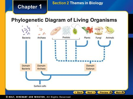 Chapter 1 Phylogenetic Diagram of Living Organisms Section 2 Themes in Biology.