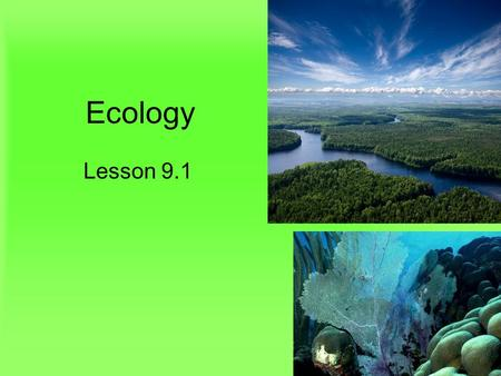 Ecology Lesson 9.1. Lesson Objectives Distinguish between abiotic and biotic factors. Describe ecological levels of organization in the biosphere. Define.